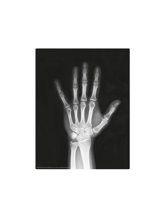 Юный врач. Скелет человека